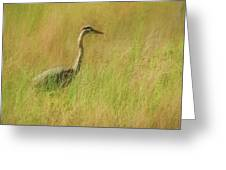 Blue Heron In The Grass. Greeting Card