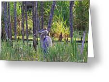 Blue Heron-in The Swamp Greeting Card