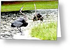 Blue Heron Mating Dance Greeting Card