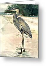 Blue Heron On Shell Beach Greeting Card