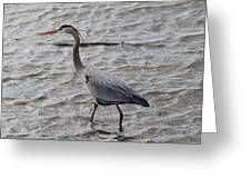 Blue Heron  On The Lake Greeting Card