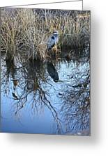 Blue Heron. Greeting Card