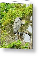 Blue Heron Series Little One Greeting Card
