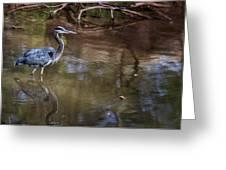 Blue Heron Stalking  Greeting Card