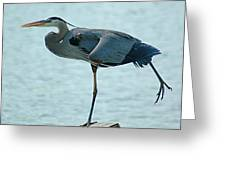 Blue Heron Stretching Greeting Card