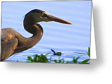 Blue Heron-the Profile Greeting Card