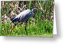Blue Heron With Lunch Greeting Card
