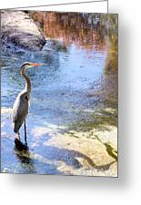 Blue Heron With Shadow Greeting Card