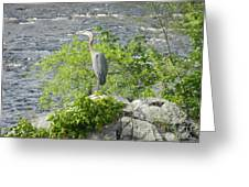 Blue Herring Bird  Greeting Card