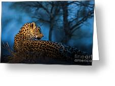 Blue Hour Leopard Greeting Card