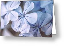 Blue Houres, Blue Flowers Greeting Card