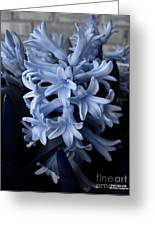 Blue Hyacinth Greeting Card