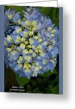 Blue Hydrangea Bouquet Greeting Card