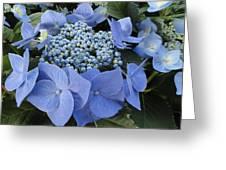 Blue Hydrangea Buds Greeting Card