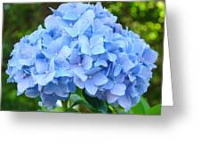 Blue Hydrangea Floral Art Print Hydrangeas Flowers Baslee Troutman Greeting Card
