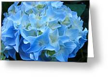Blue Hydrangea Floral Flowers Art Prints Baslee Troutman Greeting Card