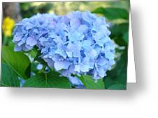 Blue Hydrangea Flowers Art Botanical Nature Garden Prints Greeting Card