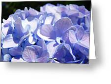 Blue Hydrangea Flowers Art Prints Baslee Troutman Greeting Card