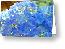 Blue Hydrangea Flowers Art Prints Summer Hydrangeas Baslee Greeting Card