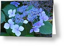 Blue Hydrangea Flowers Floral Art Baslee Troutman Greeting Card