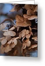 Blue Hydrangea II Greeting Card