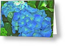 Blue Hydrangea In Bellingrath Gardens In Mobile, Alabama2 Greeting Card
