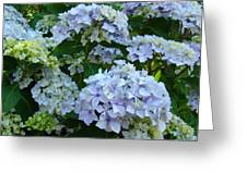 Blue Hydrangeas Art Prints Hydrangea Flowers Giclee Baslee Troutman Greeting Card