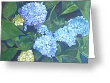 Blue Hydranges Greeting Card