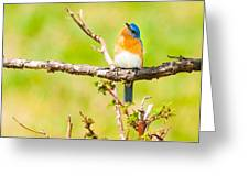 Blue In Green Greeting Card