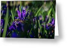 Blue Iris Field  Greeting Card