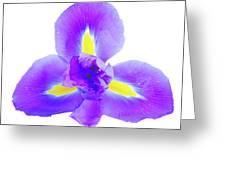 Blue Iris Flower Greeting Card