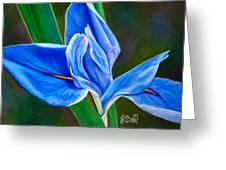 Blue Iris Greeting Card by Laura Bell