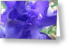 Blue Iris Greeting Card