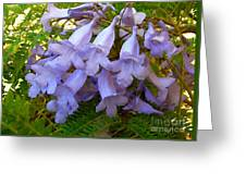 Blue Jacaranda Greeting Card