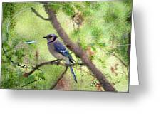 Blue Jay 1404 Greeting Card