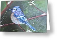 Blue Jay 2 Greeting Card