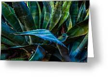 Blue Jay Agave Greeting Card