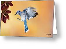 Blue Jay Beauty Greeting Card