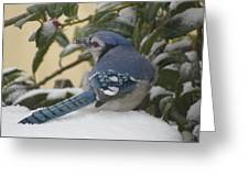 Blue Jay Beauty Greeting Card