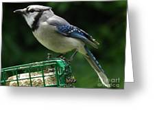 Blue Jay Day Greeting Card