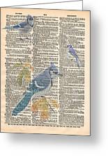 Blue Jay Expire Greeting Card