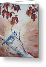 Blue Jay - Geai Bleu Greeting Card