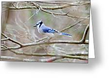 Blue Jay Greeting Card by George Randy Bass