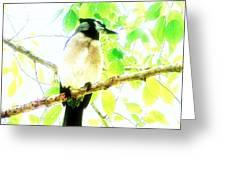 Blue Jay IIi Greeting Card