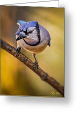 Blue Jay In Golden Light Greeting Card