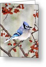Blue Jay In Snowfall 3 Greeting Card