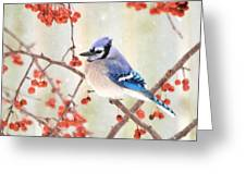Blue Jay In Snowfall Greeting Card