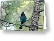 Blue Jay In The Woods Greeting Card