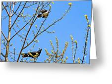 Blue Jay Mobbing A Crow Greeting Card