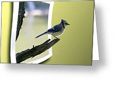 Blue Jay Perched Greeting Card